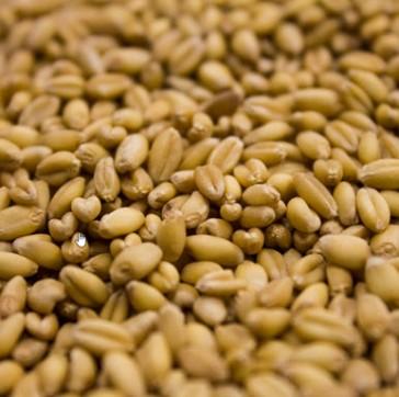 Rahr Unmalted Wheat