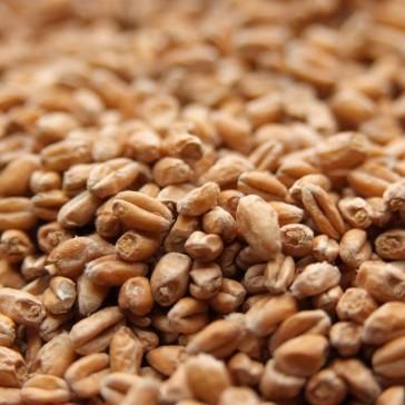 Weyermann Pale Wheat