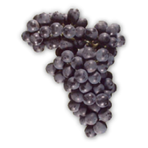 Malbec - Fresh Chilean Grapes