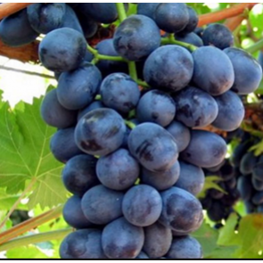 California Mixed Black Grapes