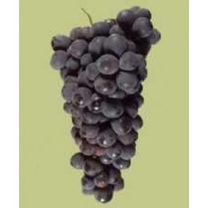 Paso Robles Extra Select Petit Syrah Grape