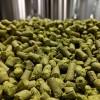 Four Star Farms MA Grown Mt Ranier Hop Pellets