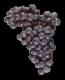 Lanza Extra Select Suisun Valley Malbec Grapes