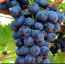 California Mixed Black Grapes
