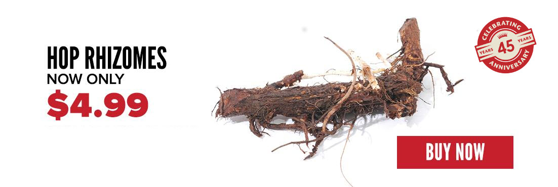 Hop Rhizomes are here!
